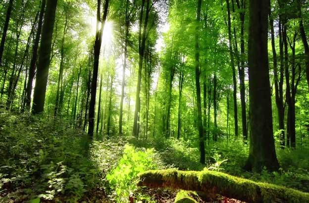 Nowa Generacja Okien Drewnianych