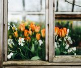 Jakie okna wybrać przy naszym polskim klimacie?